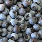 Grow Wild Blueberries